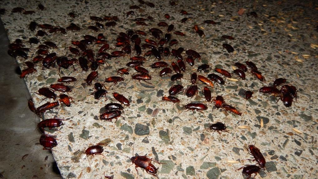 Омские тараканы вновь устроили вечеринку в Нефтяниках