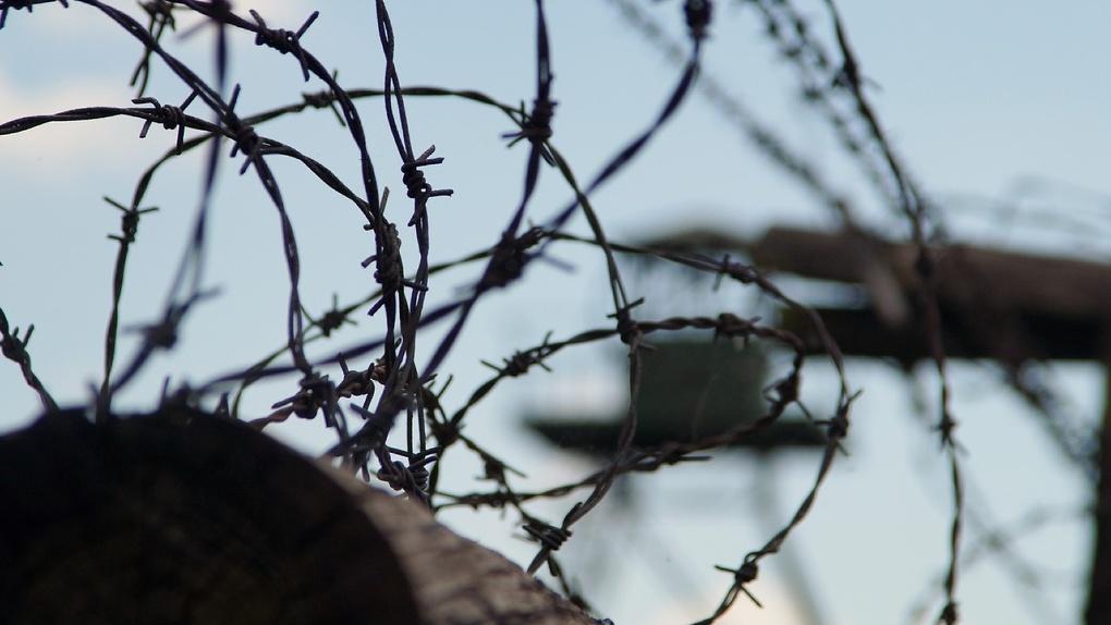 Трупы на дереве и в колонии: омичи продолжают загадочно умирать