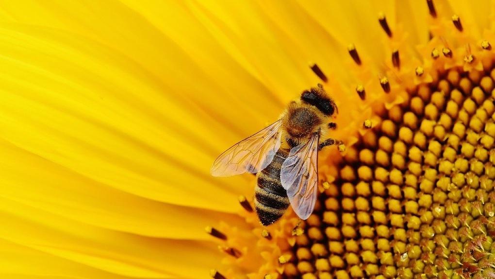 Новосибирский пасечник подал в суд на фермера из-за гибели пчёл