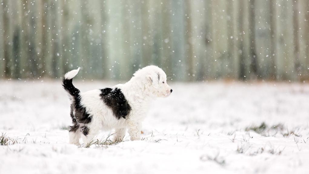 Омич спас раненого щенка, вмерзшего в лед – ФОТО