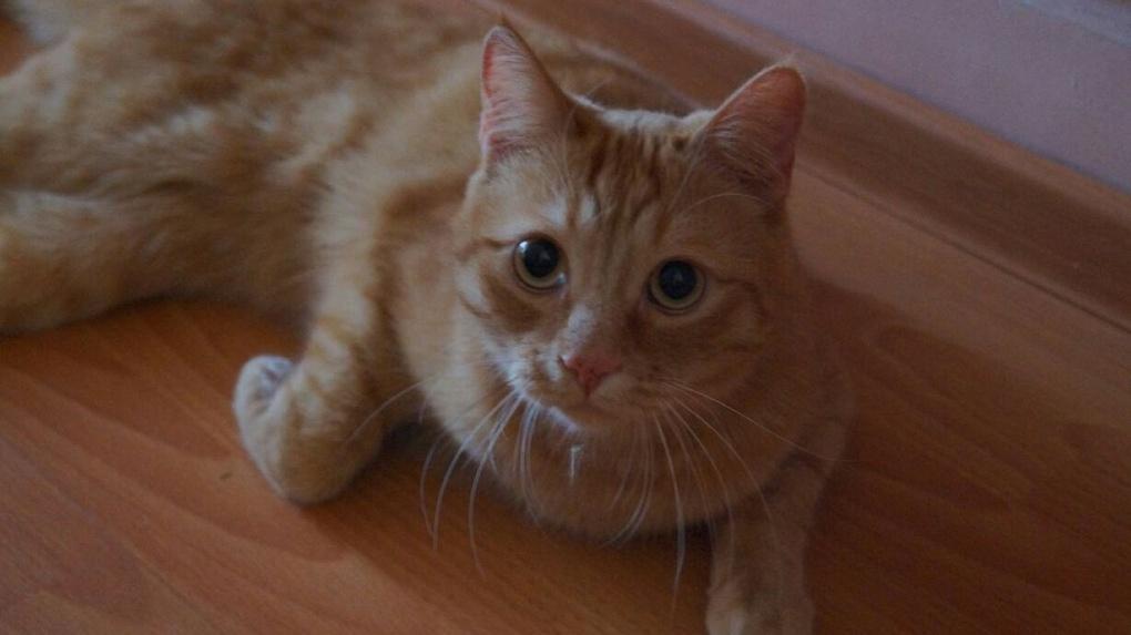 В Новосибирске завершено расследование уголовного дела о зверском убийстве кота Моти