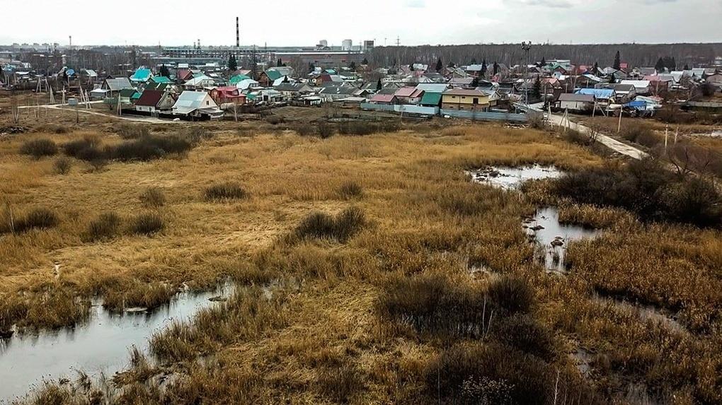 Конфликт у болота Кучино в Новосибирске: дошло до рукоприкладства