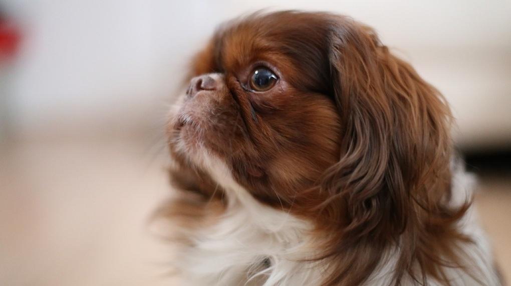 Омичи возмущены наказанием для девушки, которая устроила своей собаке мучительную смерть