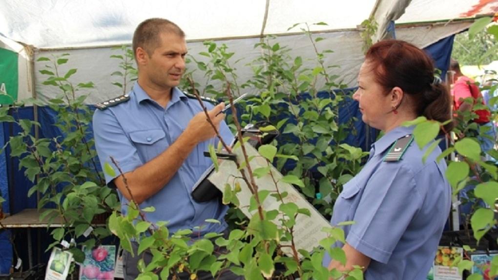 В Омске на «Флоре» у торговцев изъяли более 1 200 луковиц цветов и саженцев