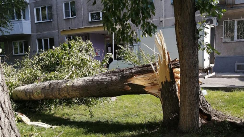Жертвы урагана: в Новосибирске упавшее из-за ветра дерево убило мужчину и травмировало школьника