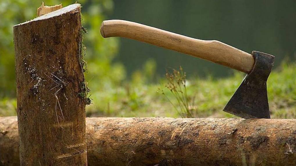 В Омской области ликвидировали ОПГ, вырубавшую лес и продававшую его в Китай