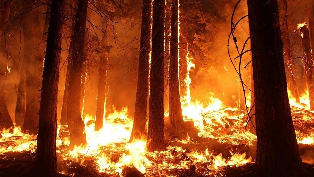 Greenpeace призывает новосибирцев помочь избежать повторения ситуации с пожарами летом 2019 года