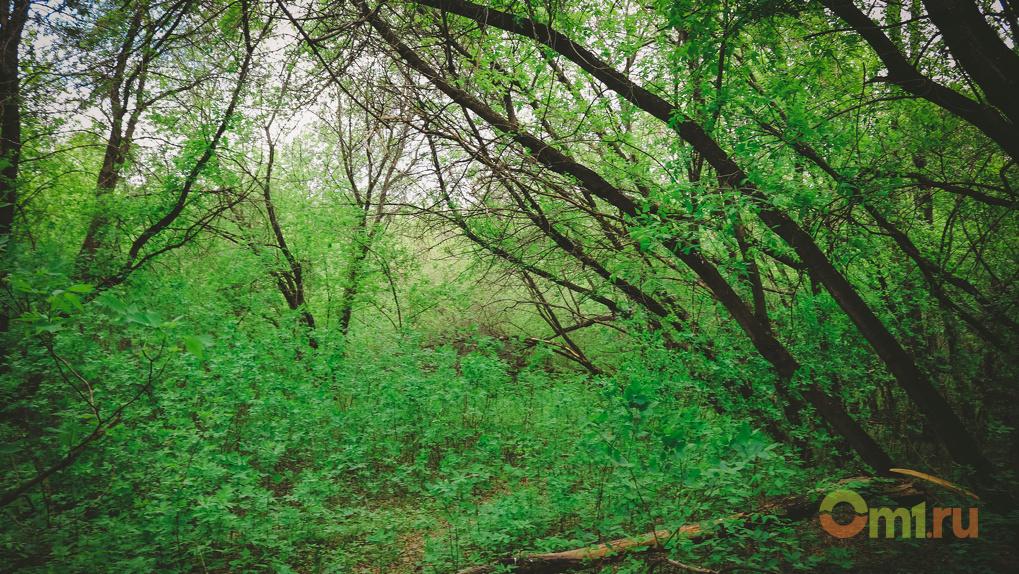 «Омск РТС» снесет деревья для ремонта теплотрасс