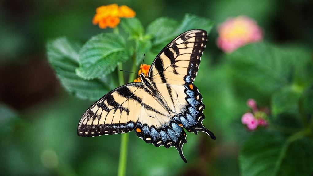 В Омске могут появиться тропические центры с бабочками