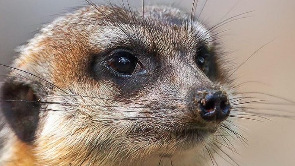 В Новосибирском зоопарке рассказали про милых животных, которые спасают от смерти