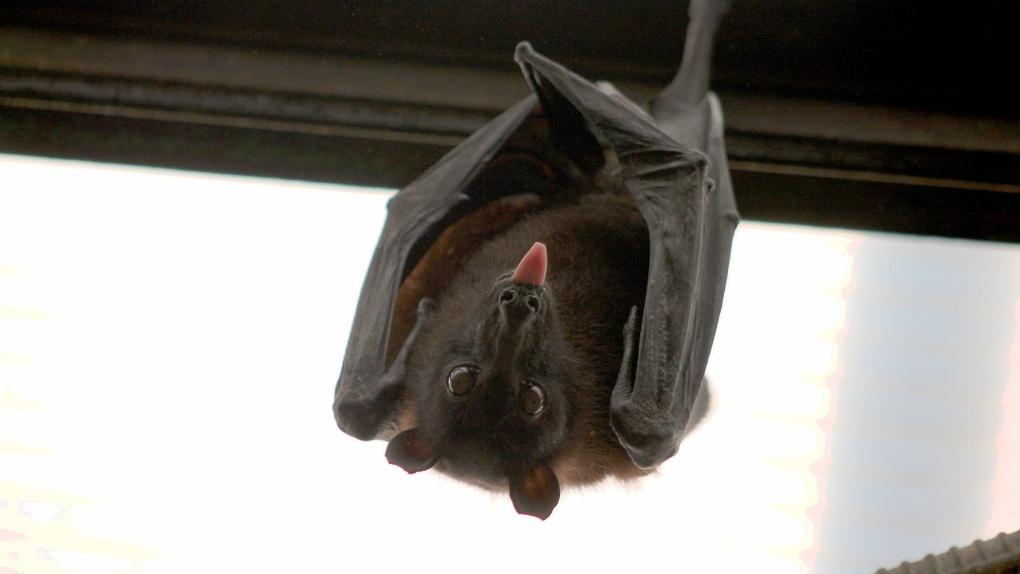Новосибирцев атакуют летучие мыши
