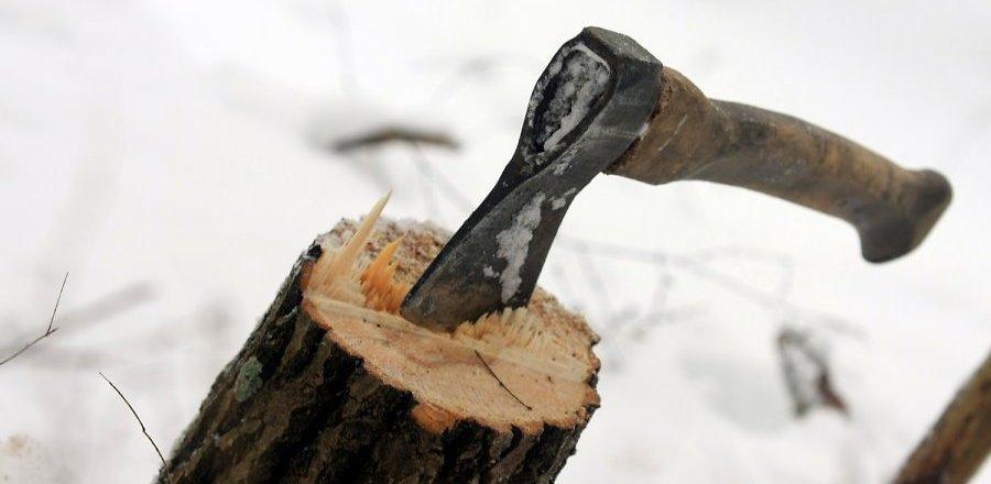 За год житель Омской области незаконно вырубил лес на 1 млн рублей