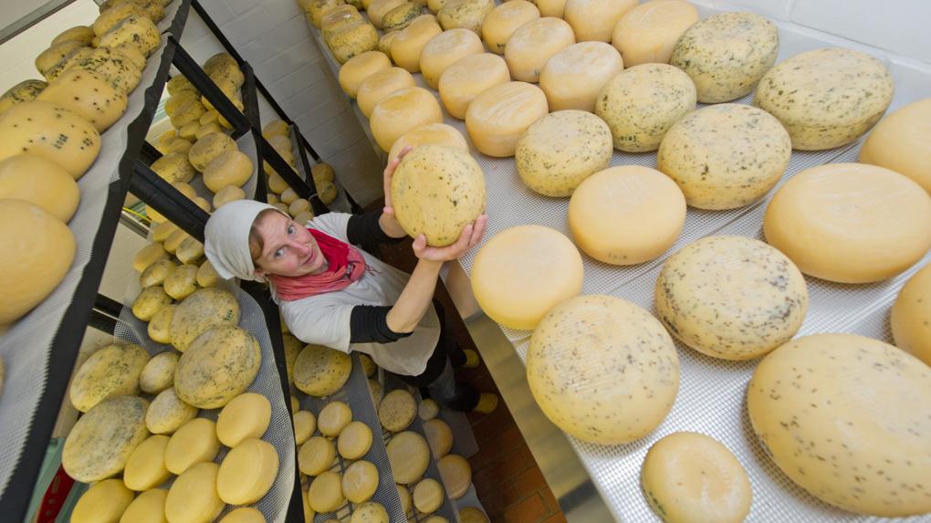 Более 12% сыра, который продается в омских магазинах, – фальсификат