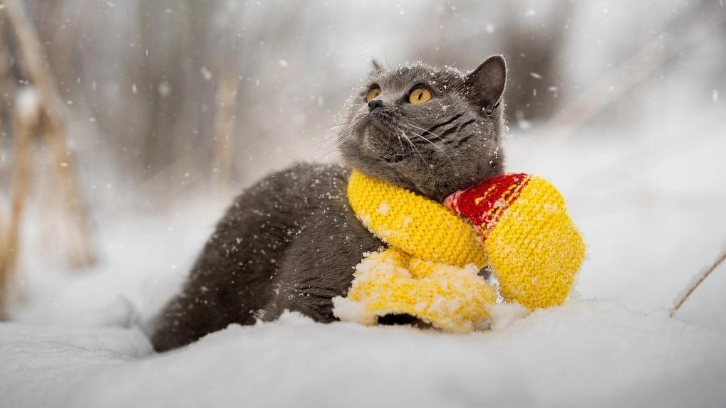 Прогноз погоды на неделю в Новосибирске: после морозных выходных придет резкое потепление и снегопад