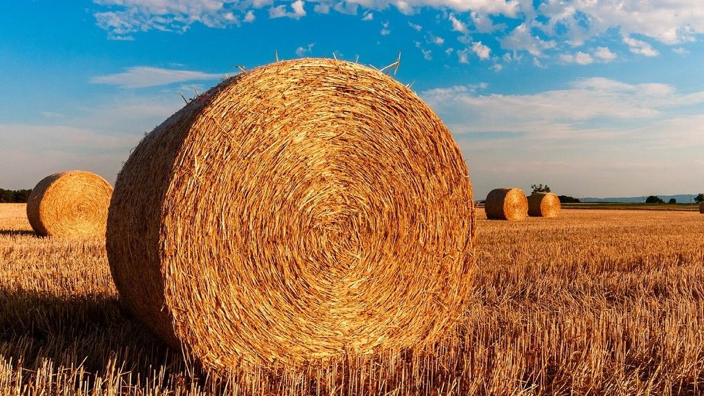 Более трех миллиардов рублей выделено в Новосибирской области на развитие сельского хозяйства