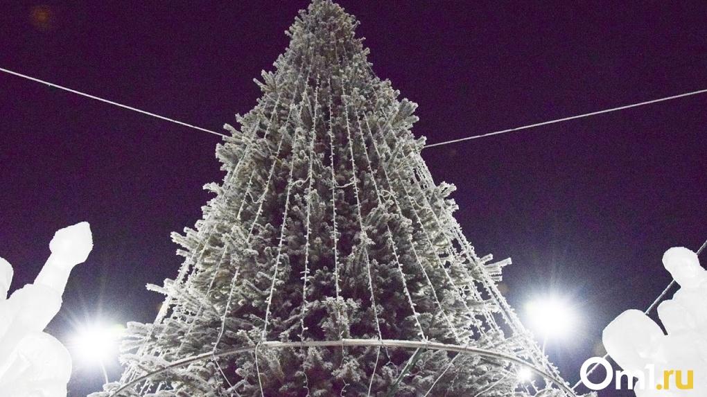 2500 новогодних пихт привезли в Новосибирскую область из Кузбасса
