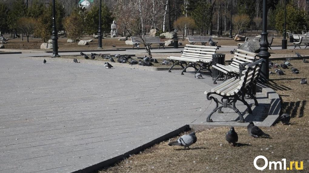 Омичей встревожил массовый падёж голубей
