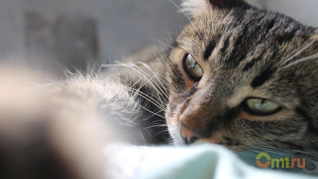 Чаще всего омичи заводят беспородных кошек
