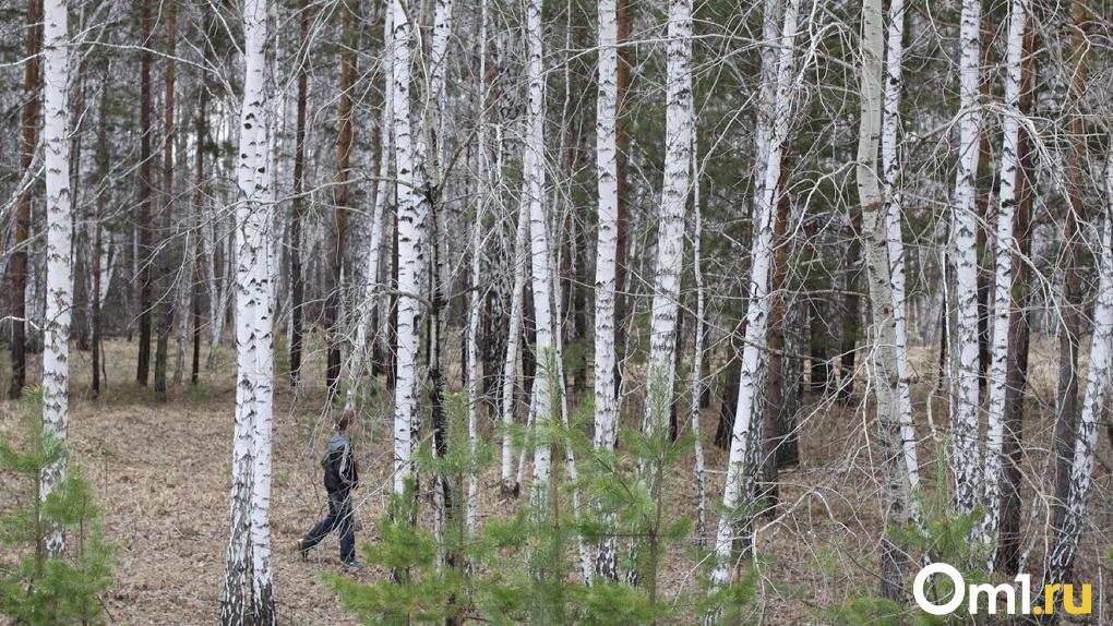 В Омске уже четвёртый день ищут девочку-подростка с рыжими волосами и веснушками