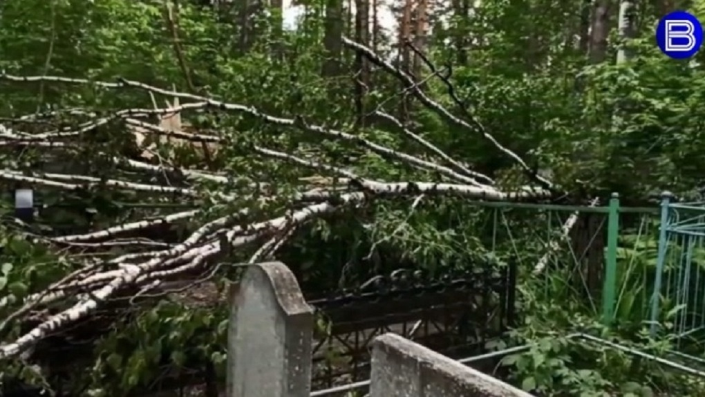 Деревья разбили надгробия на Заельцовском кладбище в Новосибирске