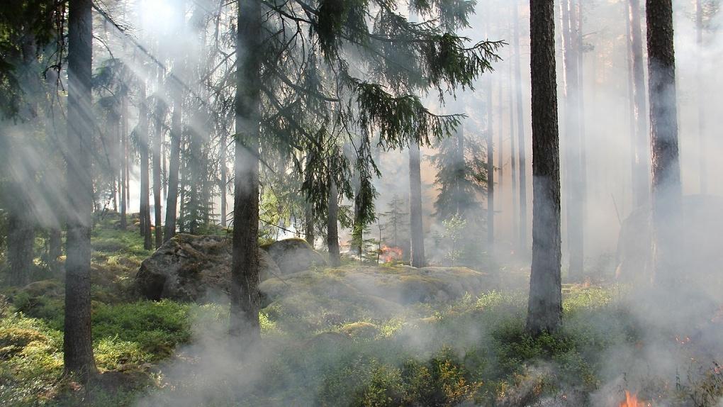 Дым от горящих сибирских лесов ушел из Омска