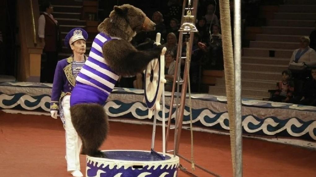 Медведи ходят по канату, а собаки на передних лапах: Новосибирский цирк представил необычное шоу