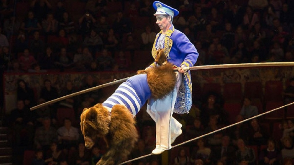Опасный трюк из книги рекордов Гиннеса покажут в Новосибирском цирке