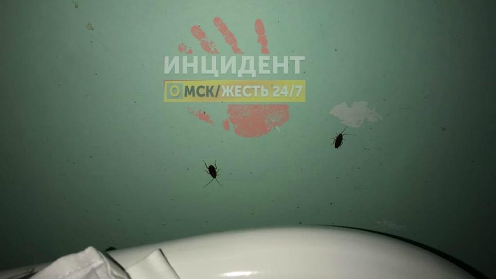 Убрать тараканов со стен омской больницы не представляется возможным