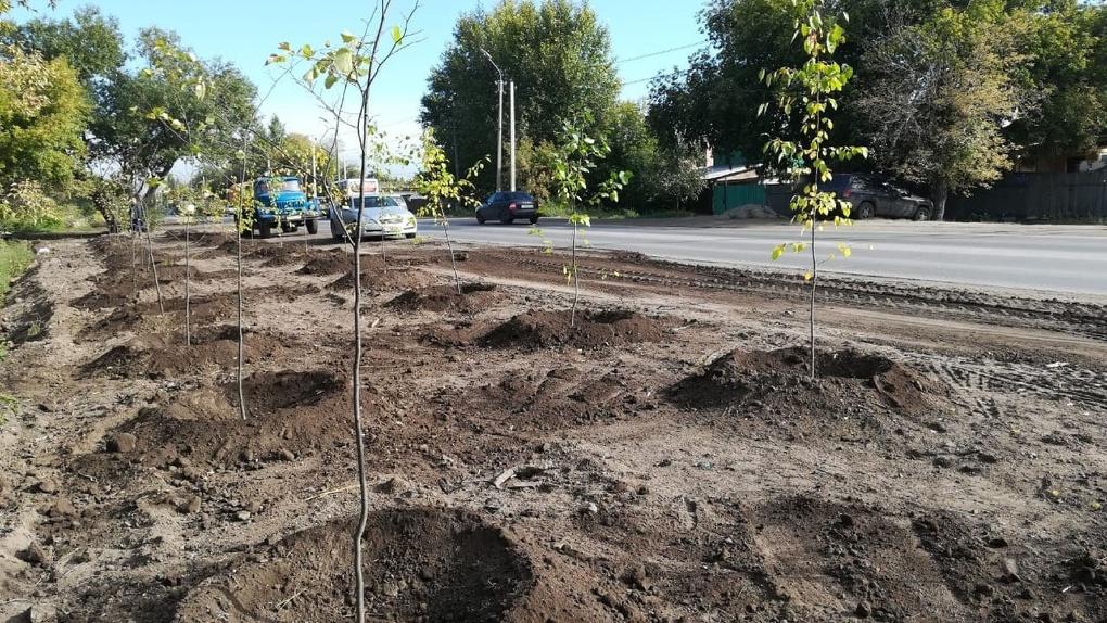 Вновь «город-сад»: улицы Омска начали засаживать липами и яблонями