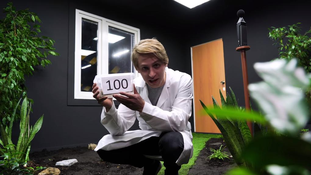 Блогер из Новосибирска измерил громкость десяти тысяч сверчков