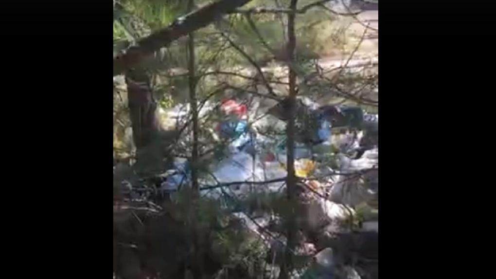 Отдать частнику или построить забор: новосибирцы решают судьбу Чемского бора