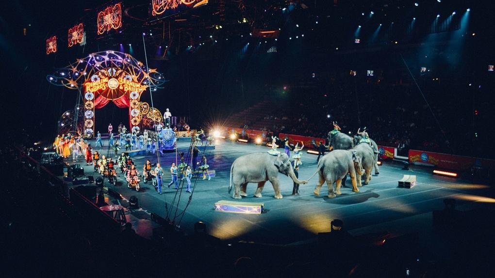 Фото за гречку. Из-за коронавируса в Омске без еды остались 40 цирковых животных