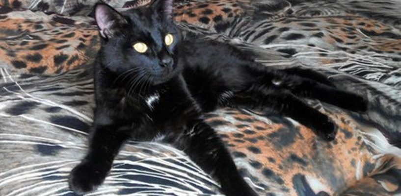 В Омске разыскиваются хозяева кота-путешественника