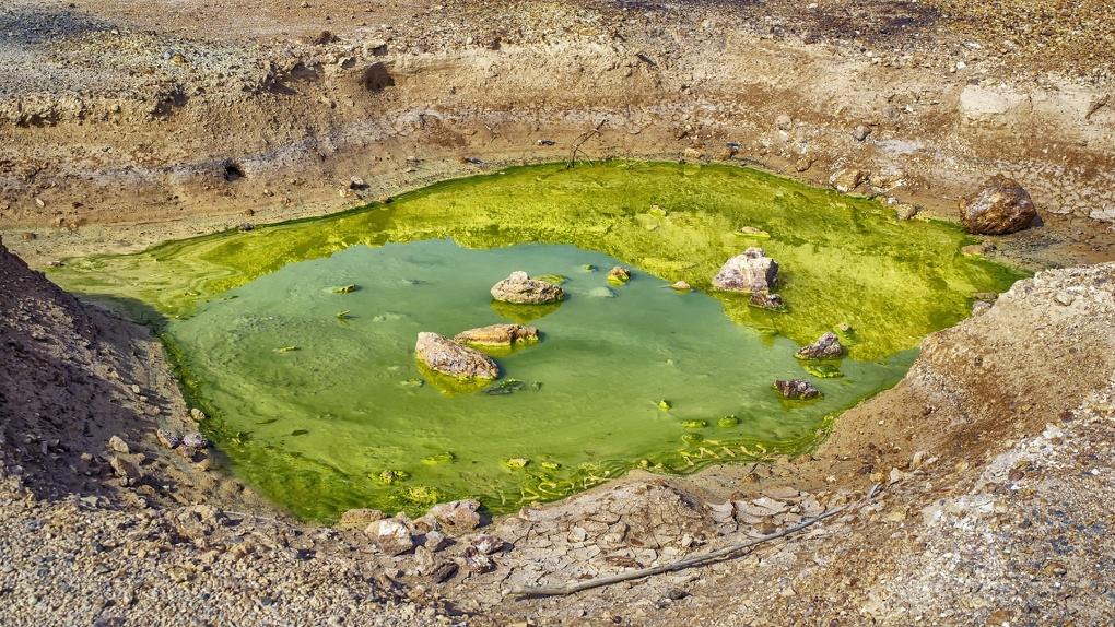 Под Омском природное озеро залили мазутом, и теперь в нем гибнет все живое