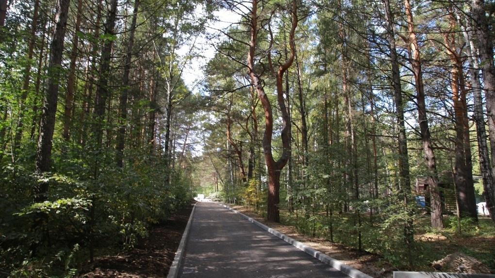 Экотропа, сухое озеро, оранжевая дорожка – как изменится Заельцовский парк в Новосибирске