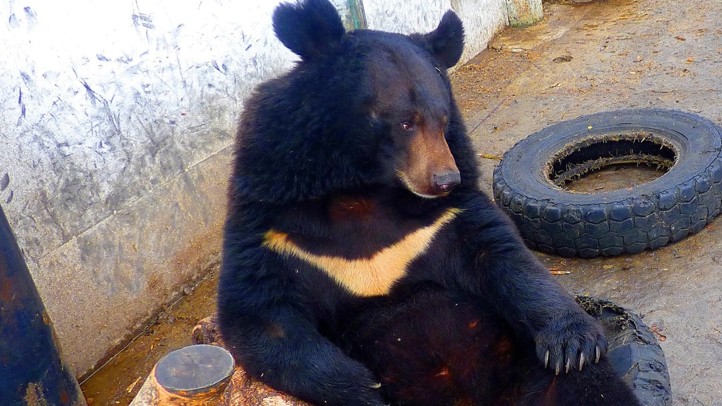 Животные Большереченского зоопарка полюбили колеса