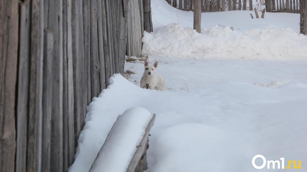 В Омской области ввели карантин из-за смертельной инфекции животных