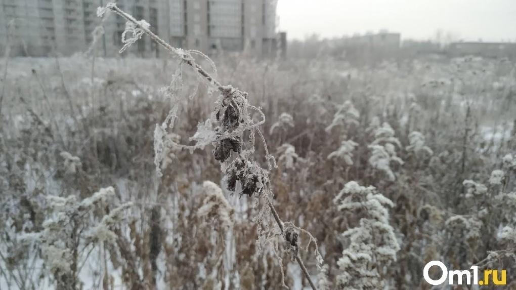 В Омск могло попасть карантинное растение высотой с небольшого ребёнка