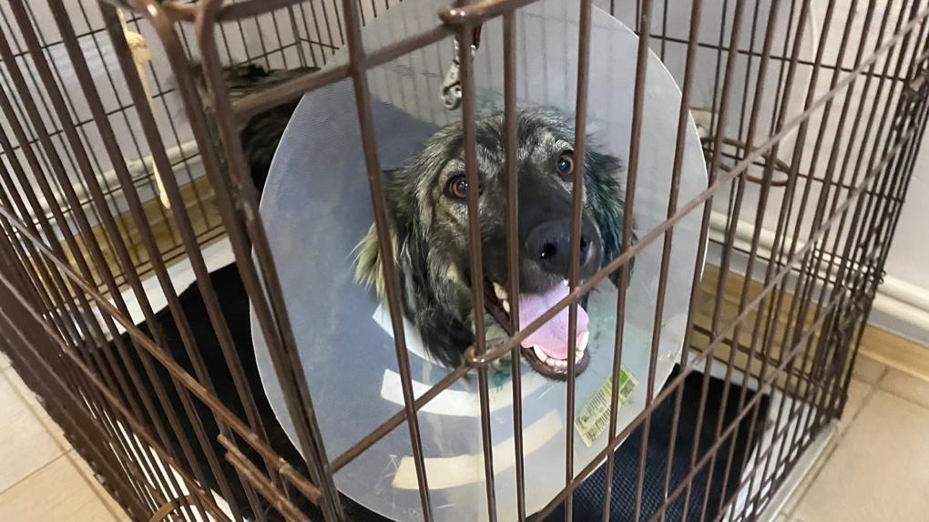 Омичи спасли собаку, которая заживо гнила на улице, и «сменили» ей пол