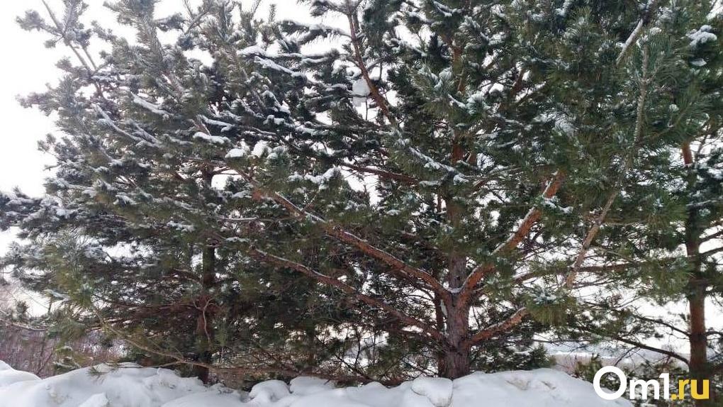 Сильные морозы захватят Новосибирск на выходных