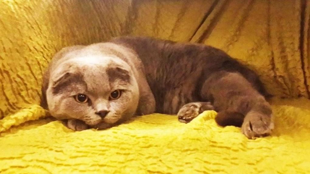 Кота-джинна выставили на продажу в Новосибирске за 10 млн рублей
