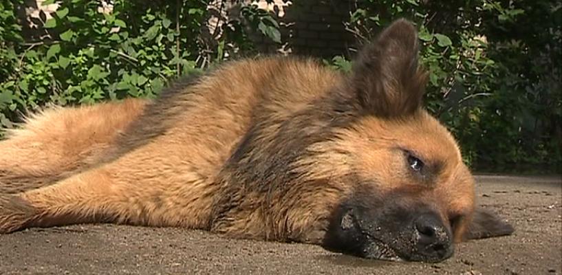 В Кировском округе Омска на этой неделе пройдет массовый отлов бродячих животных
