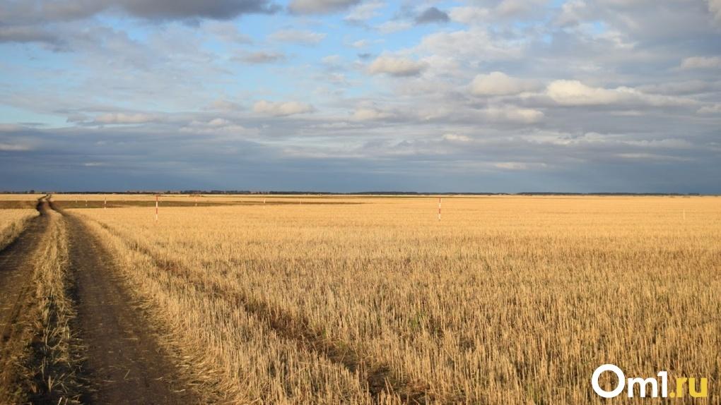 «Поля как лоскутное одеяло»: омские аграрии потеряли сотни миллионов из-за засухи