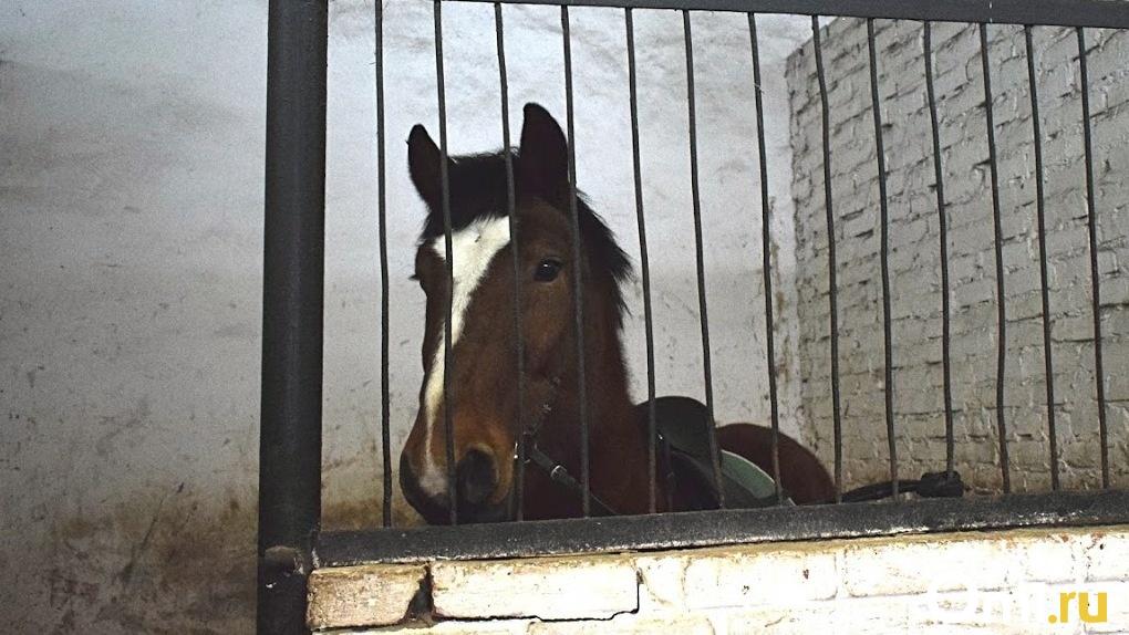 В Омской области мужчина украл лошадь, чтобы добраться до дома