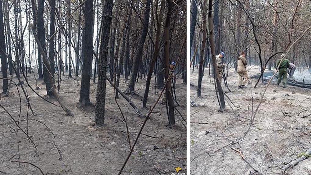 Роща выгорела на берегу Новосибирского водохранилища