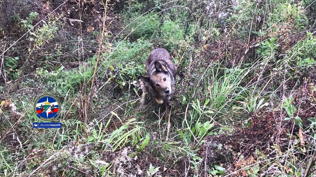 Новосибирские спасатели вызволили собаку из глубокого колодца
