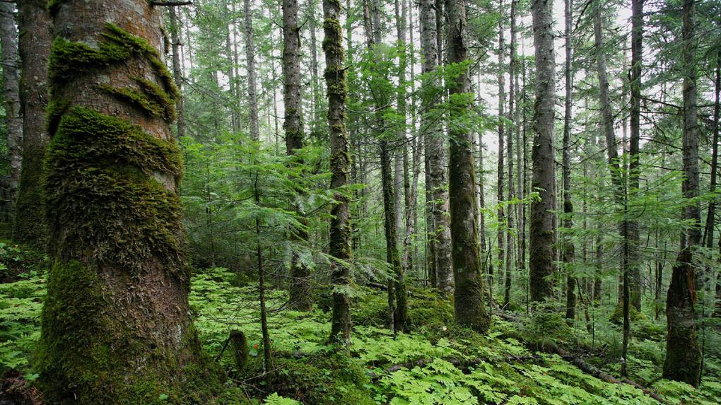 После субботника омичей зовут прибраться еще и в лесу