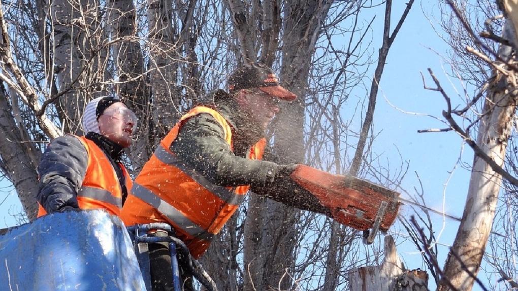 В Омске решили снести больше 300 деревьев: кому они помешали