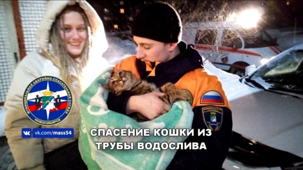 В соцсетях появилось трогательное видео о спасении кошки в Новосибирске