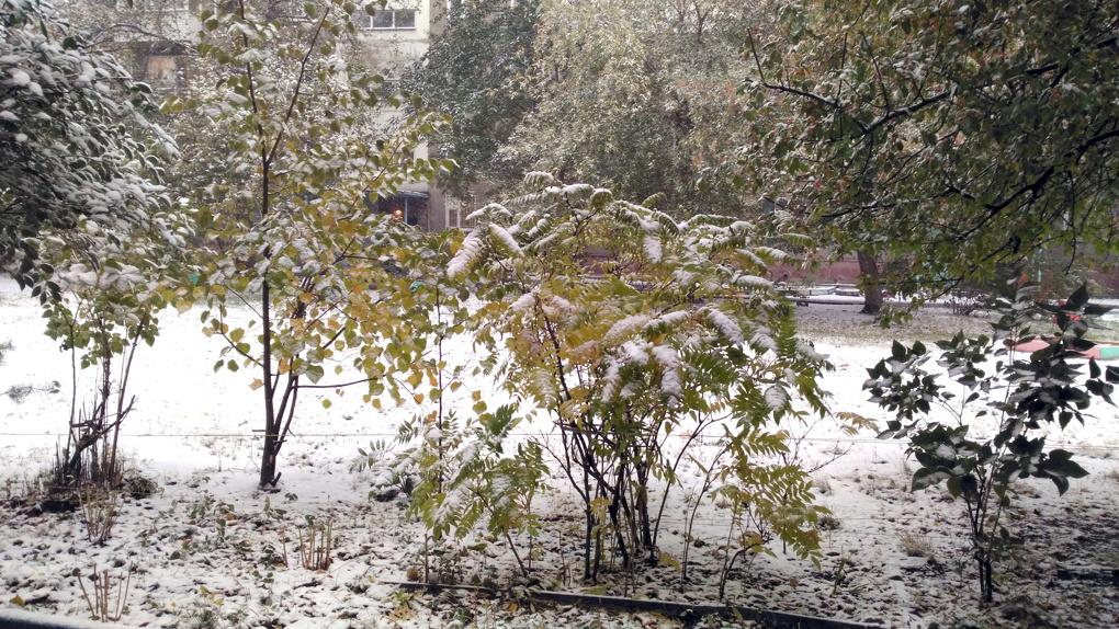 Тепло, прощай: в Новосибирск пришли дожди и снег